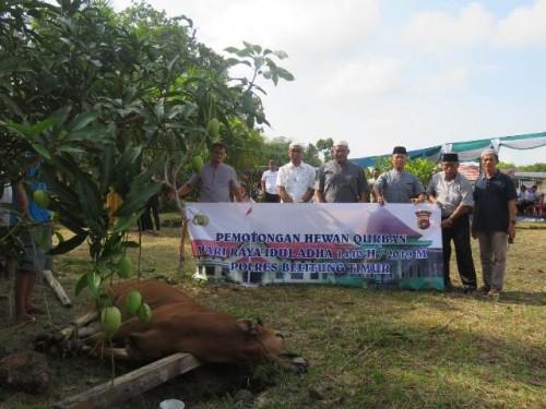 Jajaran Markas Polisi Resort Belitung Timur (Mapolres Beltim), usai melaksanakan sholat Idul Adha di masjid Sirotul Mustakim jalan Lipat Kajang Manggar sekaligus melangsungkan pemotongan hewan qurban.